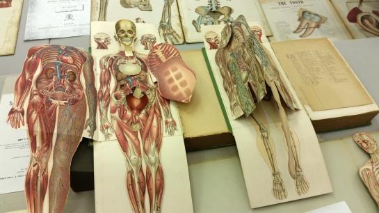popup anatomy1