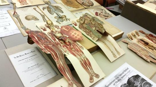 popup anatomy2