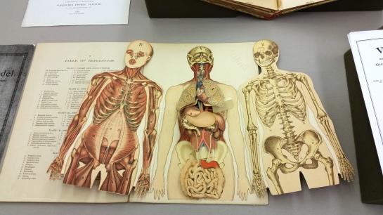 popup anatomy3