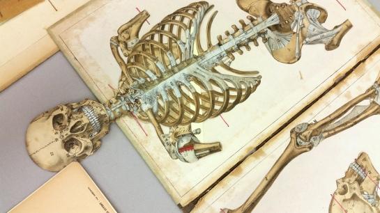 popup anatomy4