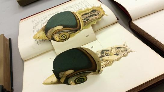 popup snail